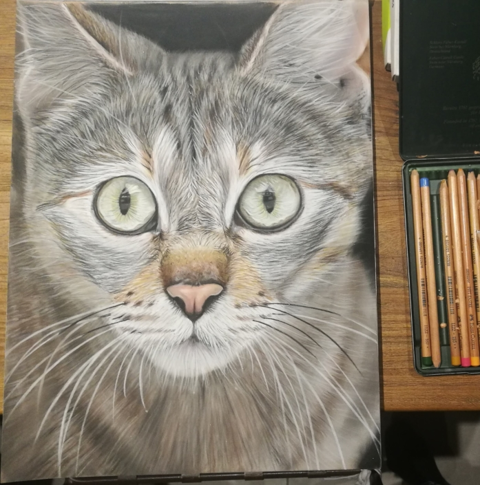 portrait animal chat